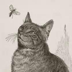 catandfly